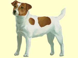 Dogzer - jeu de chien sur 2001jeux.com
